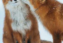 Foxies! :D