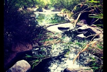 Guest Photos! / See what others have done at Miraval!! / by Miraval Resort & Spa