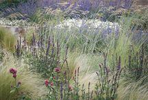 Costal garden