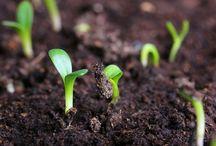 Как сажать семена