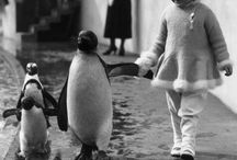 Penguins / Penguins just wanna have fun