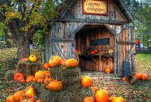 fall scenery pumpkins
