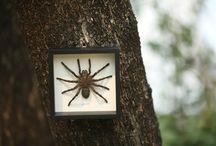 Arachnids in Frames
