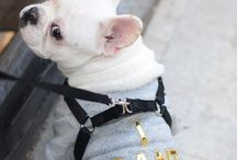 Pets of the Internet / This board will make your heart melt with happiness / by Bow & Drape
