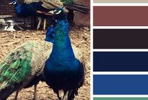 Color Palettes / by Lucky Peacock Gems