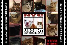 Help save cats!