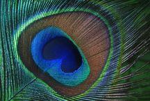 Matieres Ailes, plumes, oiseaux