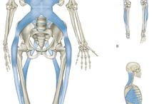 anatomia ....