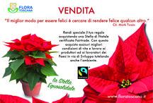 Ponsettie Fairtrade / le Stelle di Natale certificate Fairtrade...coltivate dai nostri soci in Toscana!!!