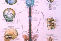 terapia cranio sacrala