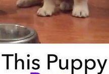 Yavru köpekler çok tatlı