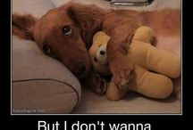 Funny animals with captions / Funny animals you will love this bored if your an animal lover like me;)