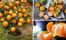 frutas e plantas