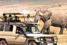 #Safari by #ACTIVTOURS