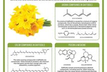 Chemistry of Spring / by ACS ChemClubs