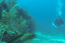 Under the sea / Under the sea