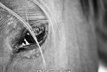 A Camera's Eye