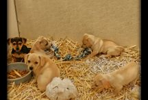 Puppies May 2015 / Puppies we have had during the month of May in the year 2015.