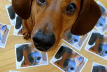 pets , doxies and more / pets   / by Karen D