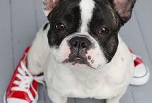 FASHION DOGS & PETS