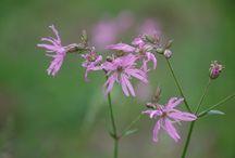 Wild herbes in Naturetum