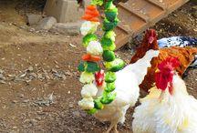 I hønsehuset