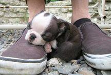 Sweet,cute