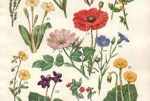 Цветы / Стилизованные