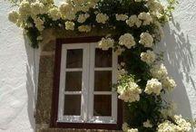 Fiori &fiori