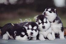 cuties puppies