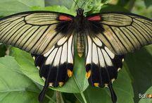 Bali Birds & Butterflies / #Bali #Birds #Butterflies and fauna