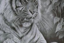 tiger ulv
