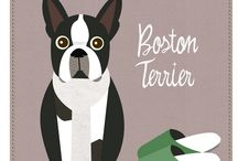 Boston Terriers! / by Kendra Valentine