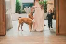 Dogs at Weddings / Your dog is part of your family, so there's no reason not to include them in your wedding day. See how other couples incorporated their four legged friends into their wedding day.