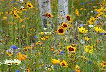 wild flower yard / by Melissa Anderson