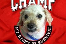 Champ: My Story of Survival / Champ is a formerly abused dog who was taken in by S.A.F.E. Rescue animal shelter. Hundreds of supporters on Facebook followed his precarious road back to health. The odds were stacked against him: his condition was so bad, his wounds so deep. But this little champion (renamed Champ) decided to live. From being beaten by life, Champ has become an inspiration and wrote his own book. Champ has a blog and he Tweets and Pins about happy ever after stories for animals.