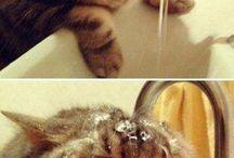 cat...