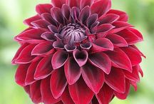 flowers / by Sydney Hertel