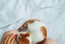 Kattepuzz