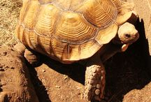 Tortoise and turtles / by Michelle Weidner