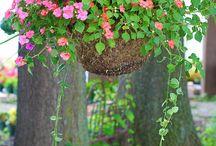 _Garden&Flowers