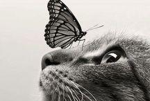 animaux trop beau
