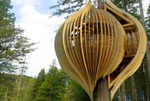 Tree House / I have always loved the idea of a tree house.  Well, maybe not a house, but a tree room.