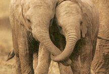 """""""An Elephant is Faithful 100%"""" / by Avery Long"""