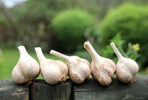 Outdoors - Vegetables - Herbs