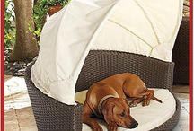 Dog Beds / They're our best friends.......here's how they should be treated. / by Antique Iron Beds by Cathouse Beds