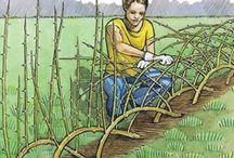 Weidenhäcken