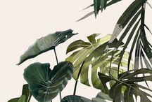 .Nature_pattern