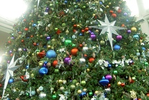 Christmas Trees / Different kinds of Christmas trees