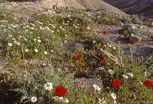 Pustyni Judzkiej Wilderness między Jerozolimą a Jerycho